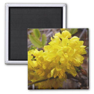 Oregon Grape Flowers Yellow Wildflowers 2 Inch Square Magnet