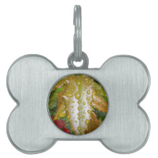 Oregon Grape With Water Drops Pet Tags