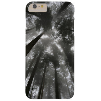 Oregon Spruce Trees Barely There iPhone 6/6S Case