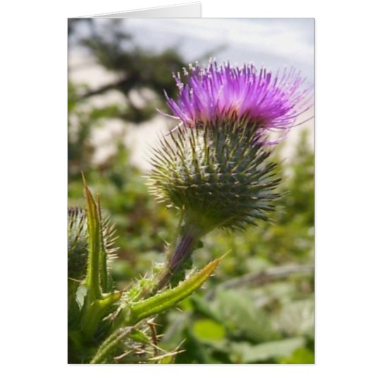 Oregon Thistles Card