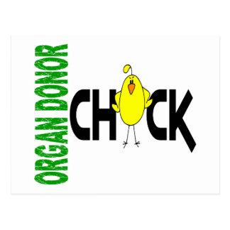 Organ Donor Chick 1 Postcard
