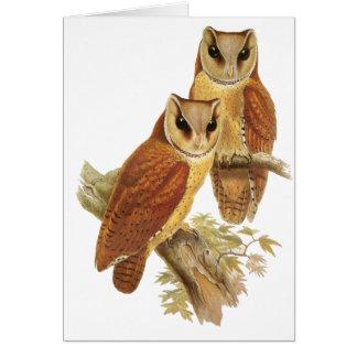 Oriental Bay Owl Card