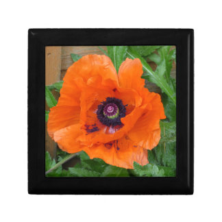 Oriental Garden Poppy Small Square Gift Box