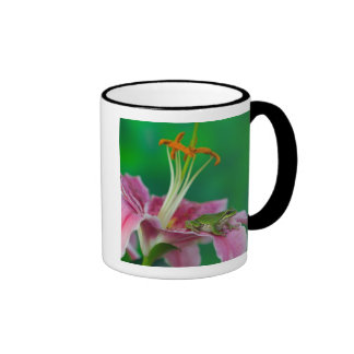 Oriental Lily and Pacific tree frog resting on Ringer Mug