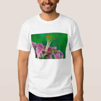 Oriental Lily and Pacific tree frog resting on Shirts