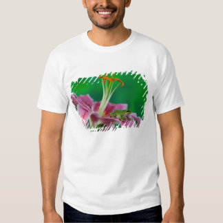 Oriental Lily and Pacific tree frog resting on Tees