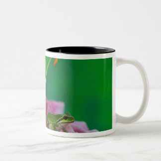 Oriental Lily and Pacific tree frog resting on Two-Tone Mug
