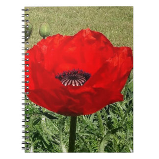 Oriental Poppy Notebook