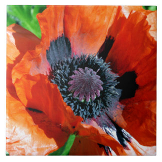 Oriental Red Poppy decorative tile