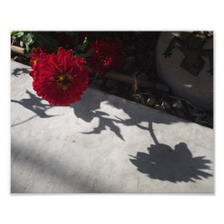 Original Flower and shadow Art Photo