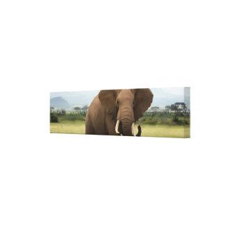 Original Single African Elephant Canvas Print