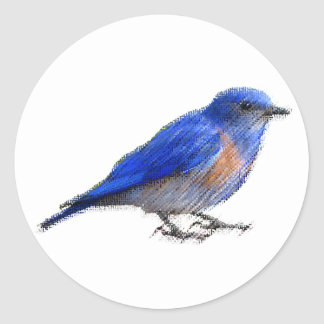 Original sketch of a blue bird (bluebird) round sticker