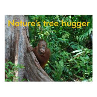 Original Tree Hugger of Nature postcard
