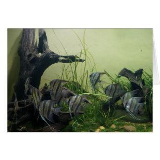 Orinoco Angelfish Card