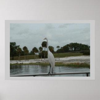 Orlando Park, Florida Poster