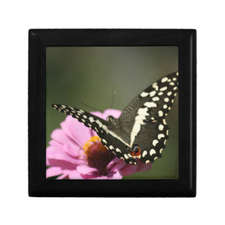 ornamental butterfly box small square gift box