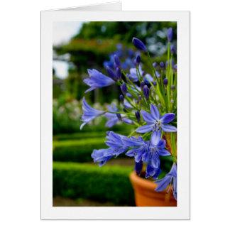 Ornamental Garden Flower In Pot - Blue - Blank Car Note Card