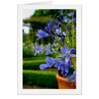 Ornamental Garden Flower In Pot - Blue - Blank Car Greeting Cards