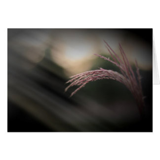 Ornamental Grass Note Cards