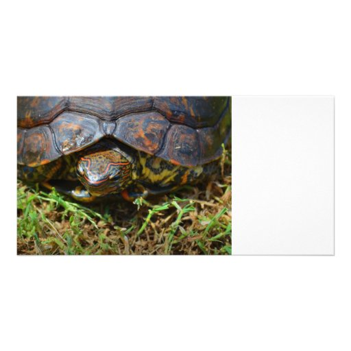 Ornate Turtle top view saturated.jpg Picture Card