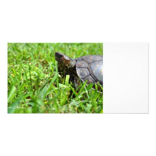 ornate wood turtle looking left photo greeting card