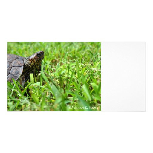 ornate wood turtle looking right photo card