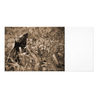 ornate wood turtle looking right sepia photo cards