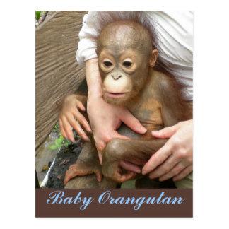Orphan Baby Orangutan Postcard