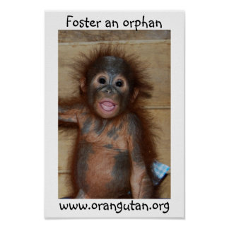 Orphan Baby Orangutan Poster