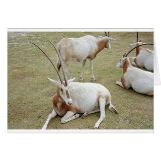 Oryx Card