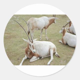 Oryx Classic Round Sticker