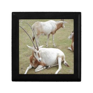 Oryx Gift Box