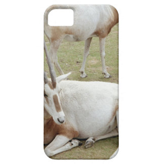 Oryx iPhone 5 Case