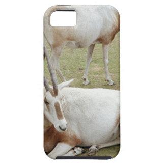 Oryx iPhone 5 Cases