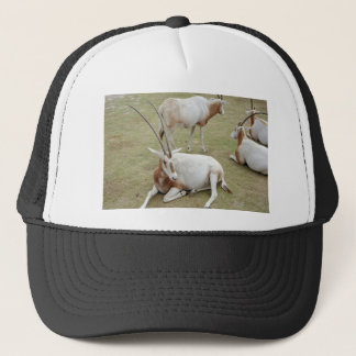 Oryx Trucker Hat