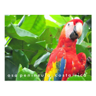 Osa Peninsula Scarlet Macaw Costa Rica Postcard