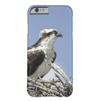 Osprey Barely There iPhone 6 Case