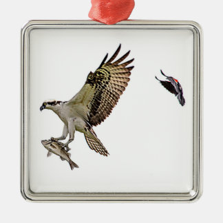 Osprey being chased by a red winged blackbird Silver-Colored square decoration