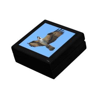 Osprey Bird Gift Box