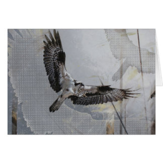 Osprey Blank Card by Andrew Denman