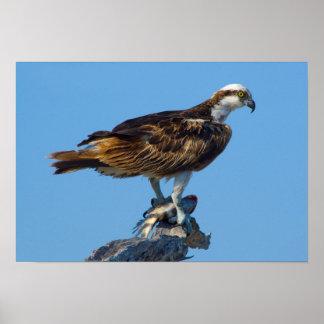 Osprey, Florida Poster