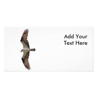 Osprey Flying Photo Customized Photo Card