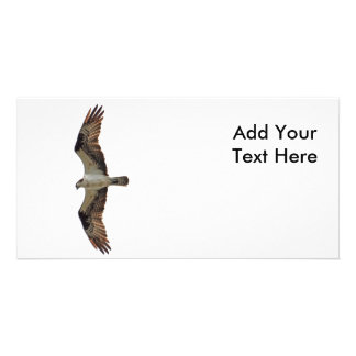 Osprey Flying Photo Picture Card