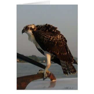 Osprey Hawk Card