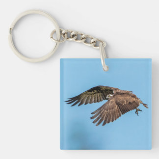 Osprey in flight at Honeymoon Island State Park Key Ring