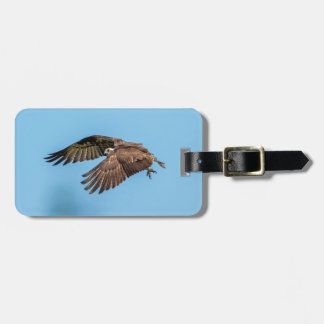 Osprey in flight at Honeymoon Island State Park Luggage Tag