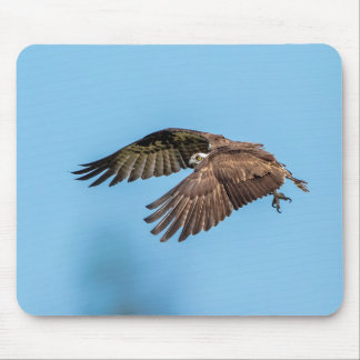 Osprey in flight at Honeymoon Island State Park Mouse Pad