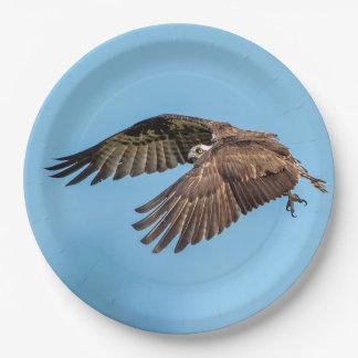 Osprey in flight at Honeymoon Island State Park Paper Plate