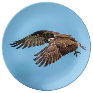 Osprey in flight at Honeymoon Island State Park Plate
