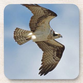 Osprey in Flight Coaster